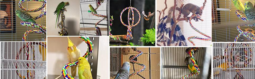 bird rope swing