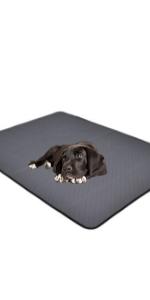 Dog training mat