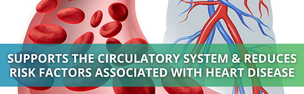 Chew C Berry Supports the Circulatory System
