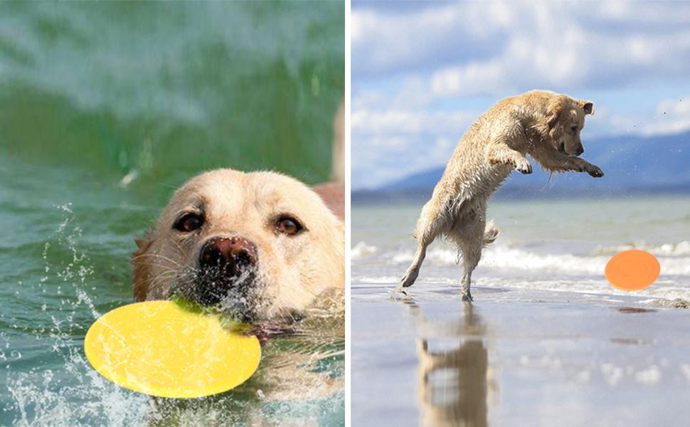 Dog Lightweight Floating Saucer