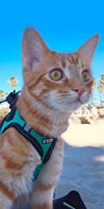 cat harness, cat accesory