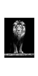 Lion Canvas Print Wall Art for Living Room