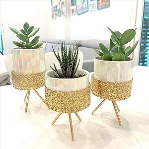 3 Succulent Pots