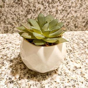 Fake Succulent mini