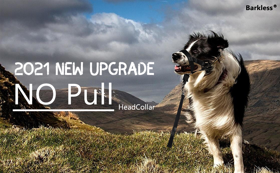 head collar for dogs