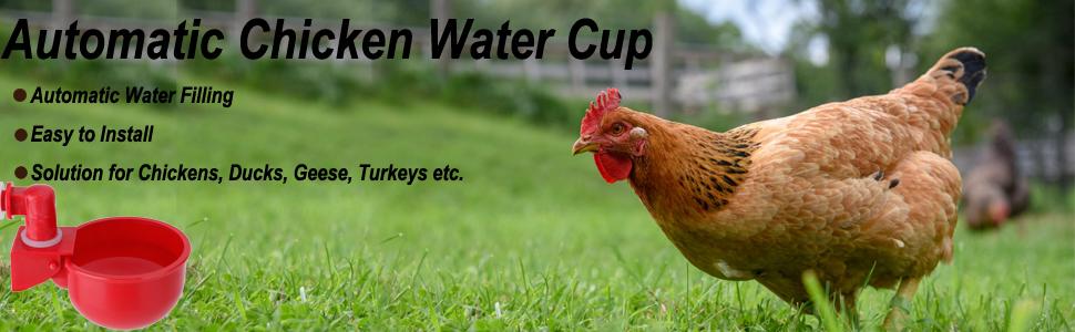 chicken water cup
