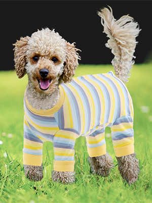 recovery suit for male female dog