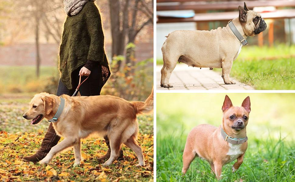 Dog Collar with Dogs Photo