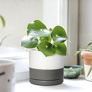 Ceramic Succulent Planter Pots