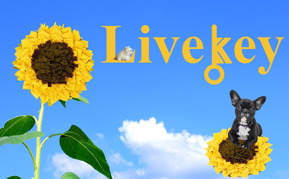 Livekey