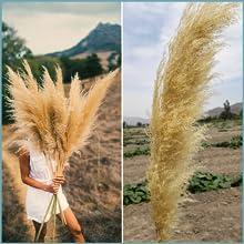 Pampas grass natural