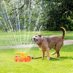 Sprinkler for Dogs