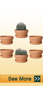 5.7 inch shallow clay pot