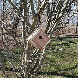 Wakefield Premium Birdhouse made of high-quality cedar wood