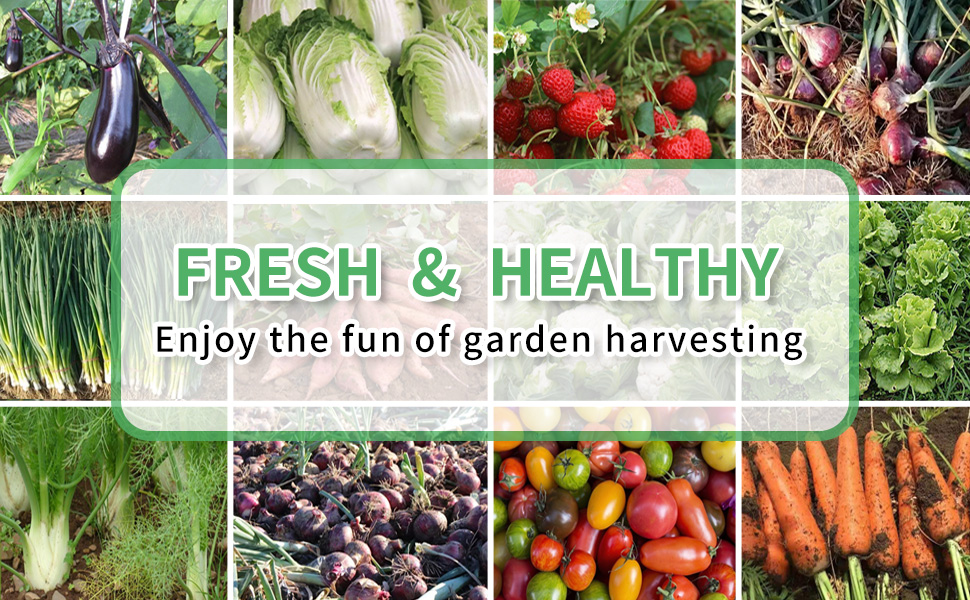 Live a fresh and healthy life