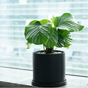 plant pot with drain