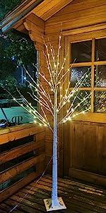 warm white birch tree