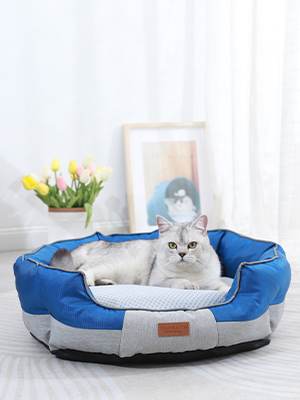 Our cat bed and a cute cat.