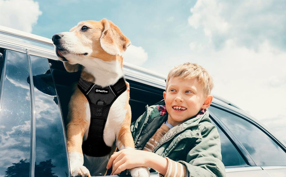 TRAVEL WITH YOUR FURRY FRIENDS