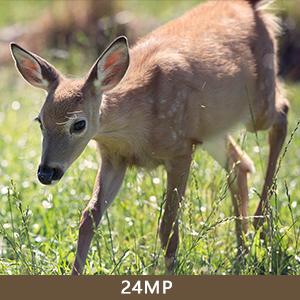 24MP trail camera