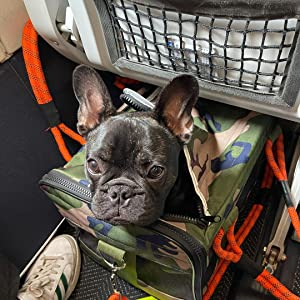 French Bulldog in Large Roverlund Pet Carrier
