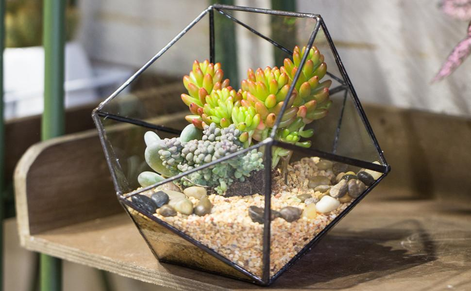 Geometric Glass Terrarium Half Ball Pentagon Planter