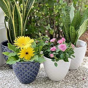 DREAM Ceramic Planter Pot Sets