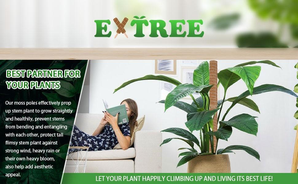 Moss pole trellis for climbing plants indoor pot