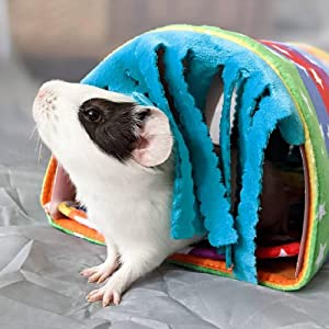 guinea pig tunnel