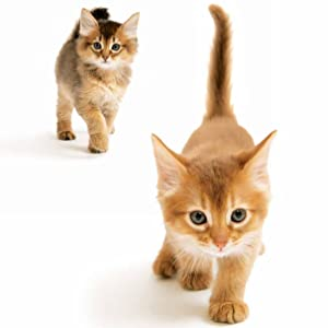 ずっといっしょ。子猫カレンダー2022