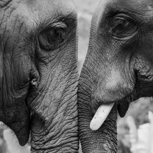 Dr Tusk says TOGETHER WE CAN MAKE A DIFFERENCE AND REVERSE THE TREND of declining elephant numbers