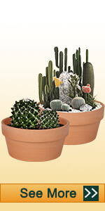 8 inch shallow clay pot
