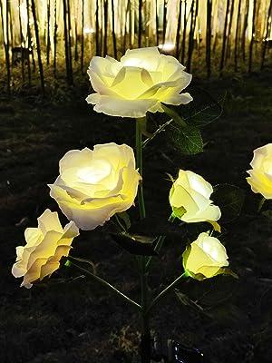 插杆玫瑰8
