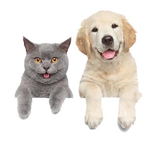 A cat & A dog