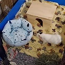 guiena pig bed