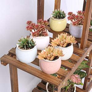 fit for small or medium sized plant pots