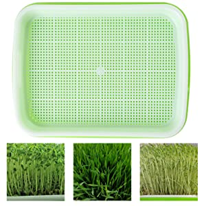 Garden Seed Sprouter Tray BPA Free PP Soil-Free Big Capacity Healthy Wheatgrass Grower