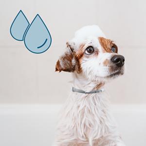 seresto water resistant