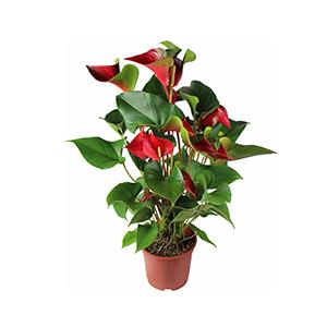 plant nursery pots