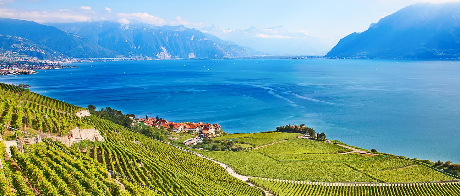 vinabon, wine company, wine accessories, wine, wine essentials
