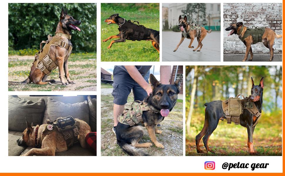 petac gear tactical dog harness