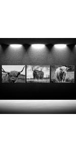 White Photo Canvases, Photo Canvas Prints, canvas print,, cow bathroom decor, white framed