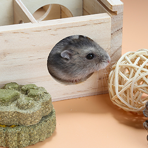 hamster and rattan ball