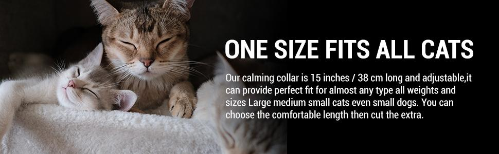 one size fits all cats
