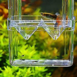 fish isolation box