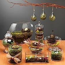 Spanish Moss Terrarium