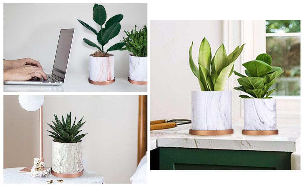 ceramic pots for plant