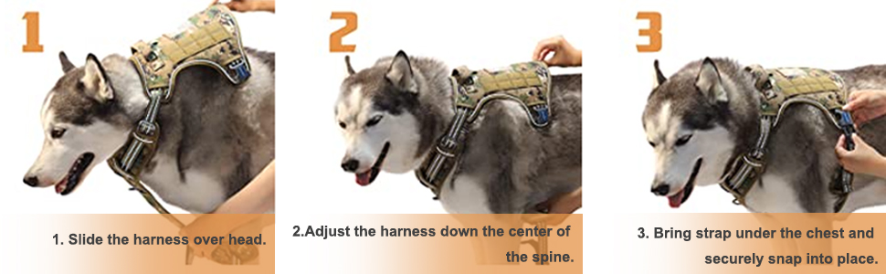how to wear dog harness