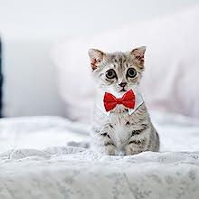 Koolmox bow ties