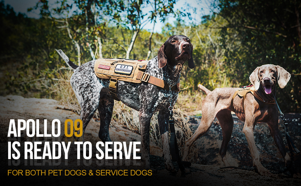 APOLLO 09 TACTICAL SERVICE DOG HARNESS